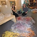 The Jellies Forever Installation Project