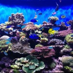 Coral Regeneration Tank