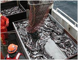 sco_overfishing